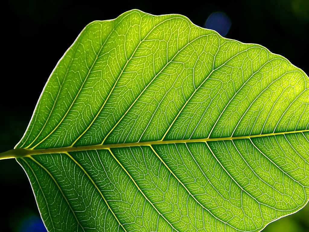 Fotosentez Nedir? Fotosentez ile ilgili bilgi