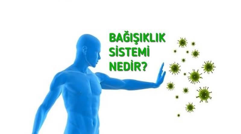 Bağışıklık Sistemi Nedir? Bağışıklık Sistemi Hakkında Bilgi